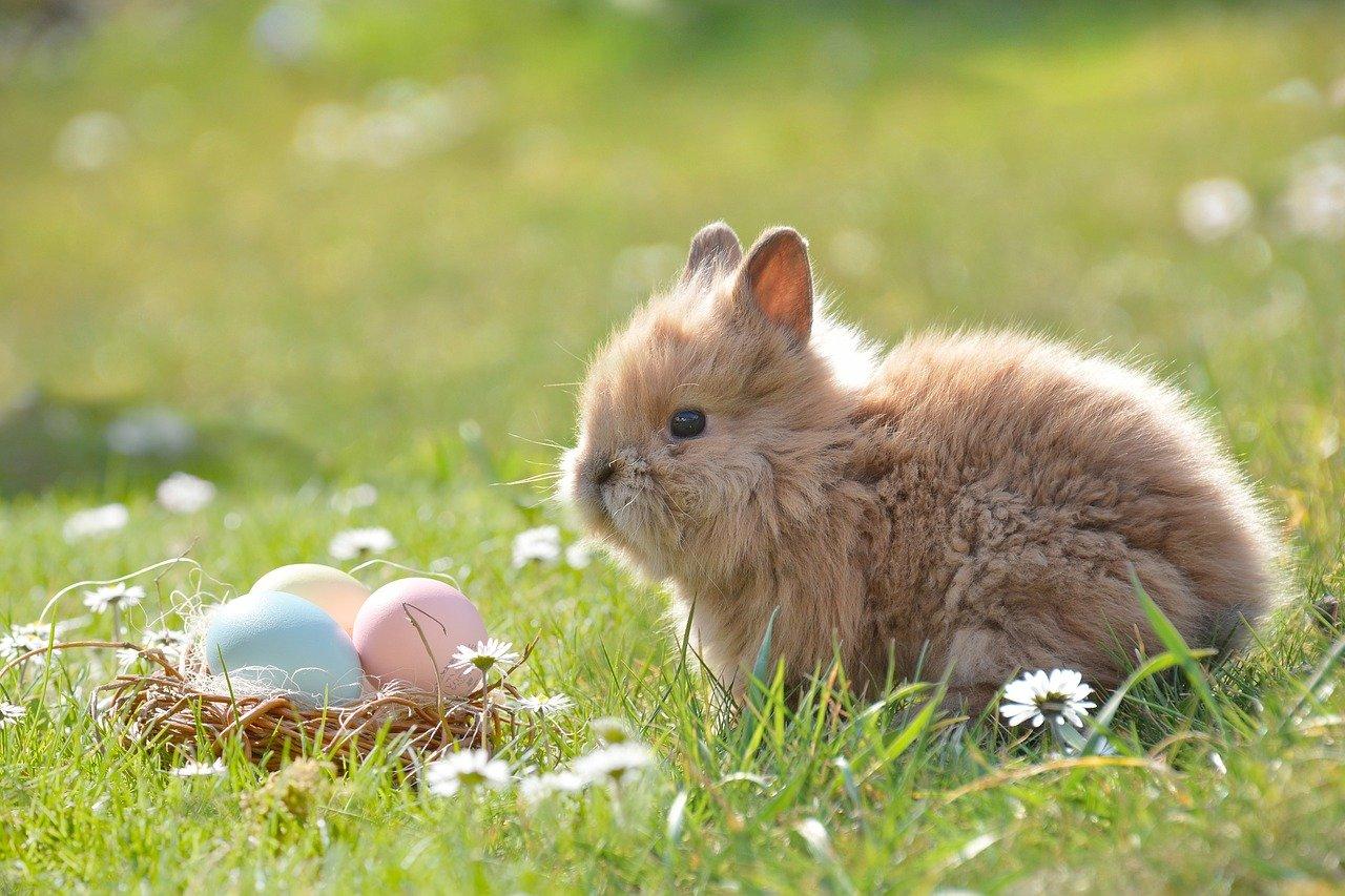 ウサギ 卵